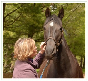 Equine Facilitated Wellness and Therapy